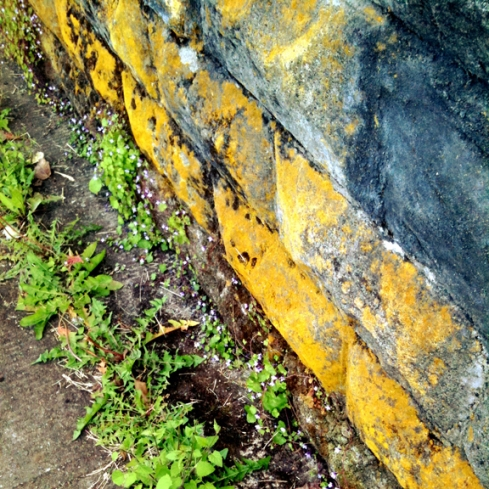 Wall and Weeds