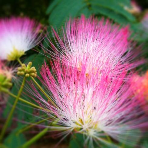 design_by_jen_pink_flower