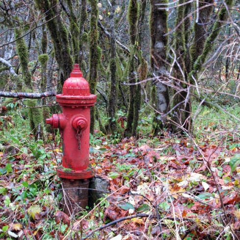 design_by_jen_red_hydrant