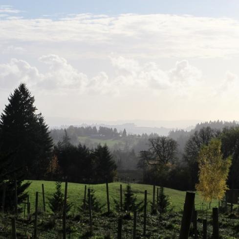 Styring Vineyards