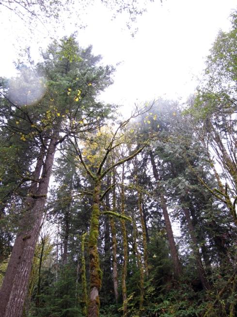 design_by_jen_vert_trees