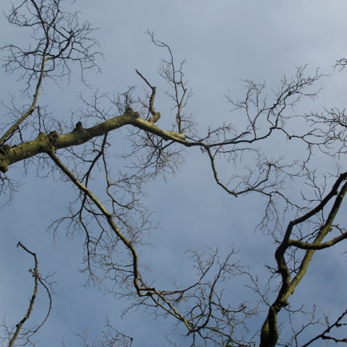 alberta_park_branches