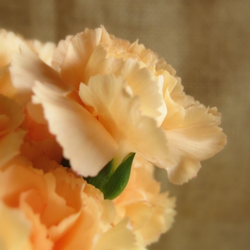 design_by_jen_orange_carnations2