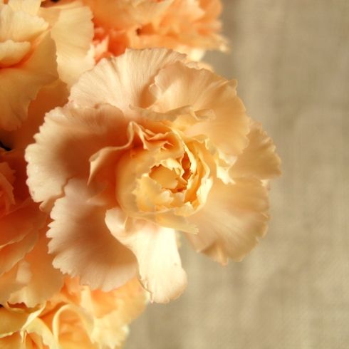 design_by_jen_orange_carnations3
