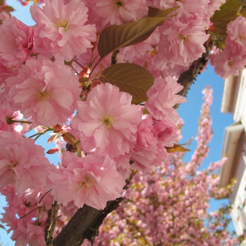 design_by_jen_cherry_blossom_2