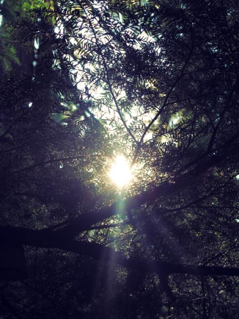 design_by_jen_mt_hood_trees