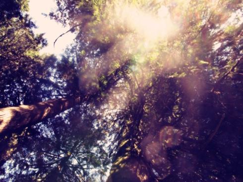 design_by_jen_trees_light